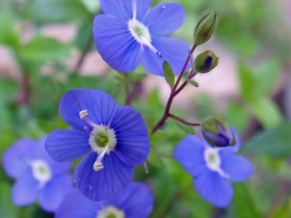 【おだやかに・・・春】好きな花とともに過ごしてた