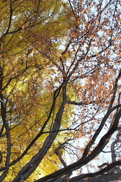黄色と枯葉