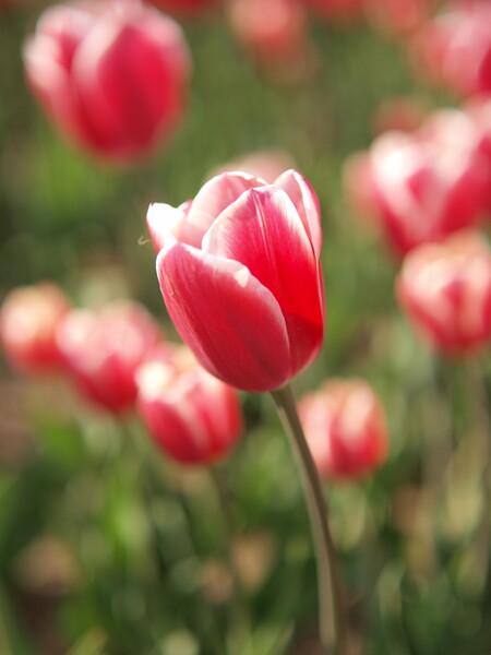 【花のある情景】 お絵かき