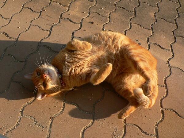【猫】顔見知り。その2