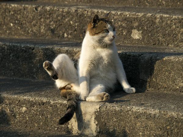 【猫】 ちょっとだけよ?
