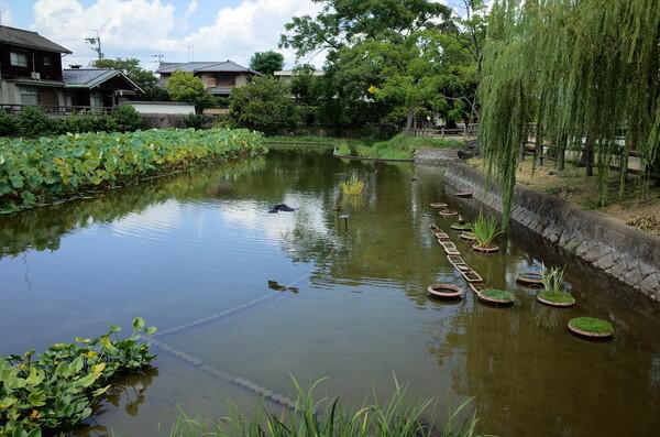 カモのいる池