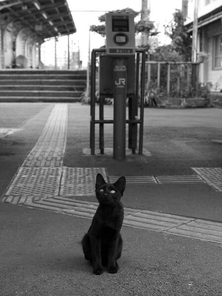 【猫】 ノラクローム