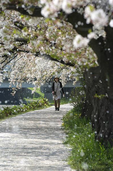 『春』桜の雪が降る中を・・・