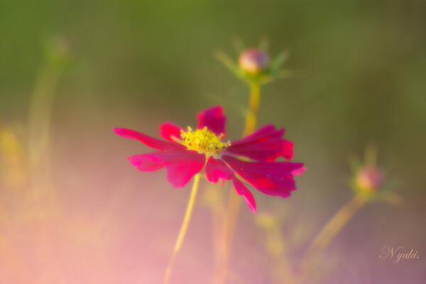 【秋】朝日の色に染めて