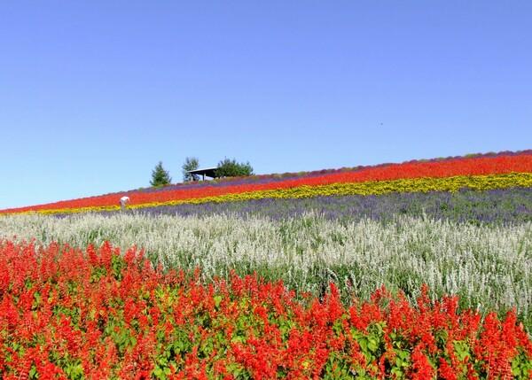 【花のある情景】花に包まれて一人【秋】