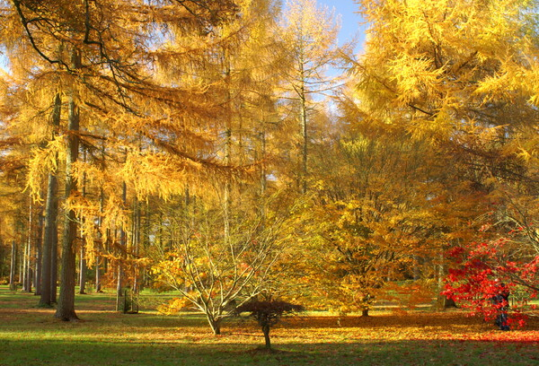 【絵のような】金色の秋陽