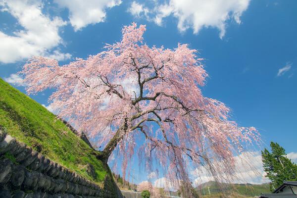 【花のある風景】岩太郎