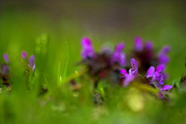 野菜畑に咲く花#1