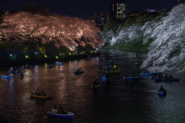 会社帰りの夜桜