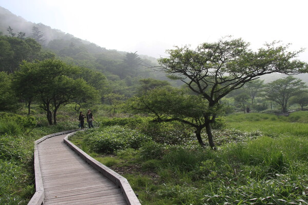 湿原散策木【道】