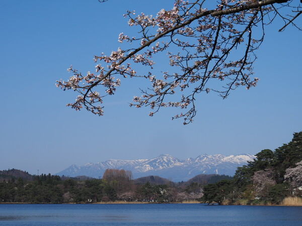 桜と那須連山