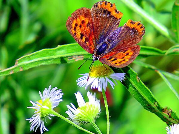 また花と蝶で