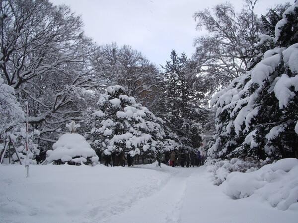 雪 積もり