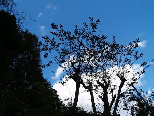 【木】シルエット♪