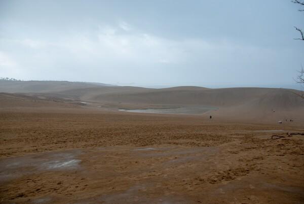 雨の鳥取砂丘・・。