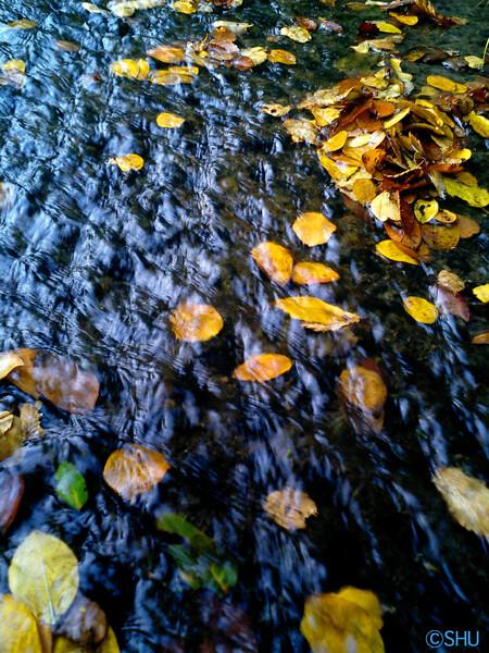 秋の流れ2