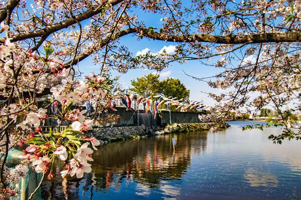 【花のある風景】春の佐屋川