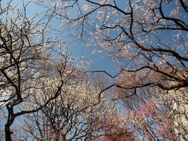 春の広がり