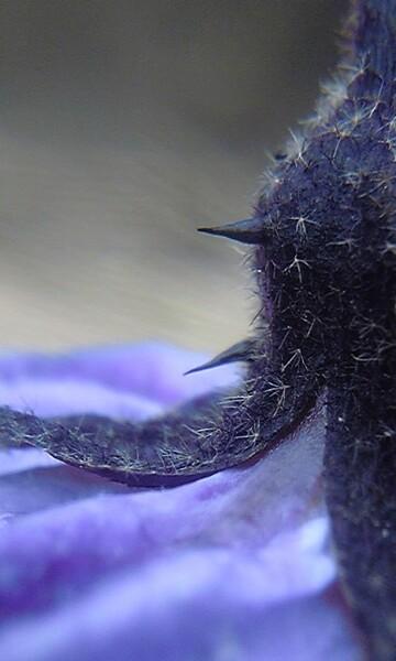 gokuuさんの毛シリーズと、TOHOTEYさんの棘。