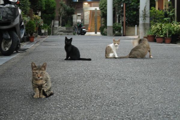 【猫】下町の野良