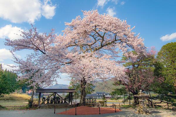 【花のある風景】桜と地蔵②