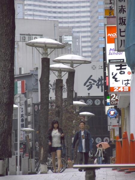【木】赤坂標準木?