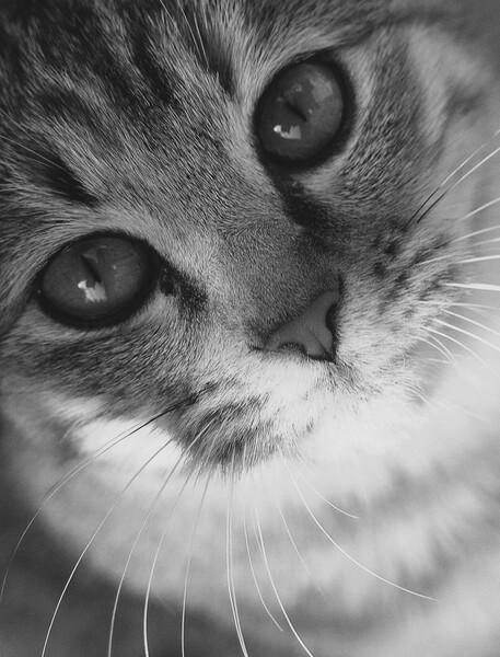 【猫】おとらさん
