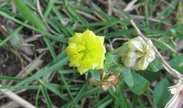 五ミリ程の花