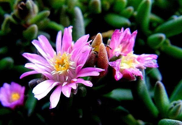 小さい花のUP