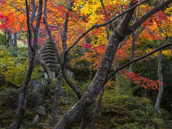 常寂光寺(京都)