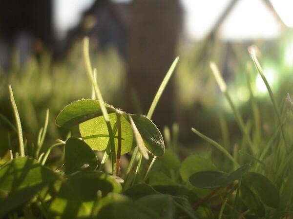 ベランダの鉢植え(枇杷の木)