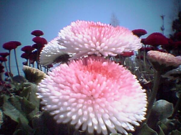 【花のある情景】ファイルNo.34