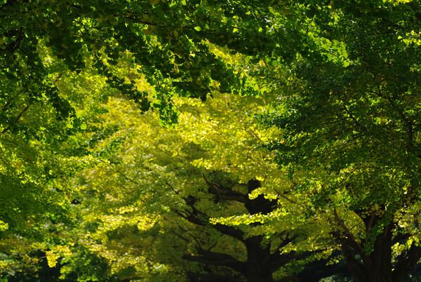 秋色(緑〜黄)