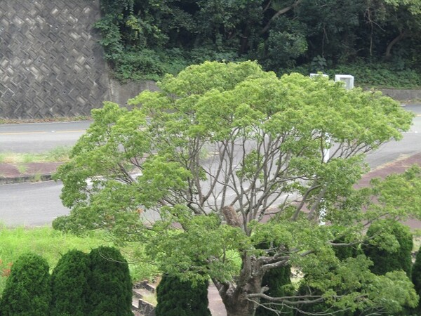 秋 ➡ 大木