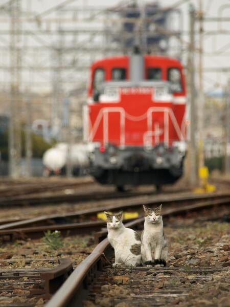 【猫】小さな操車さん