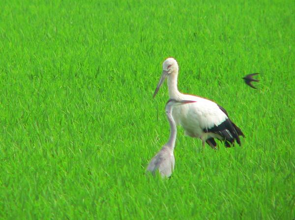 【ザ・ワールド】鳥の世界特別天然記念物