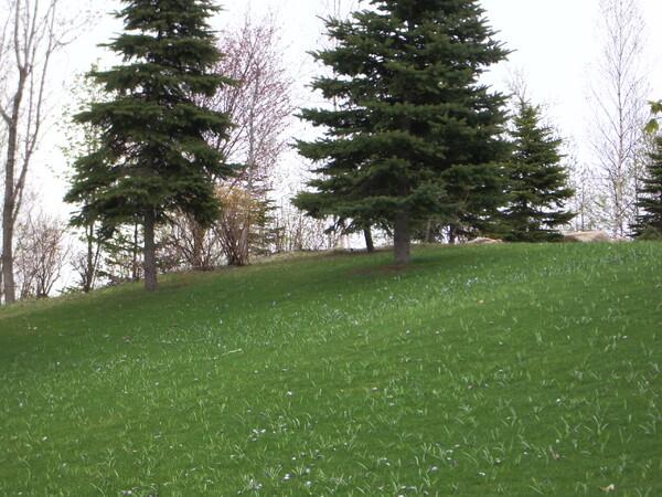 芝生のあたりが・・