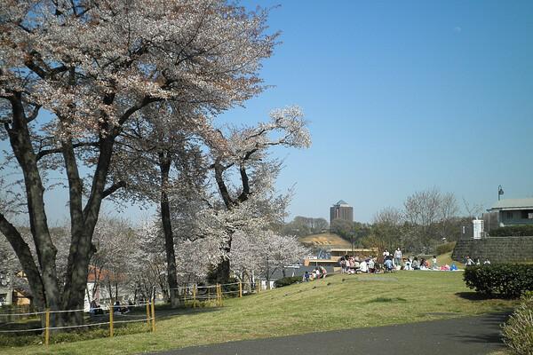 宇津貫公園 4月13日
