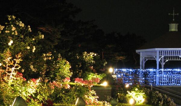 夜の薔薇園