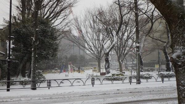 大雪の日・・・
