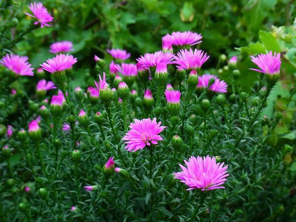 ピンクと緑のコラボ