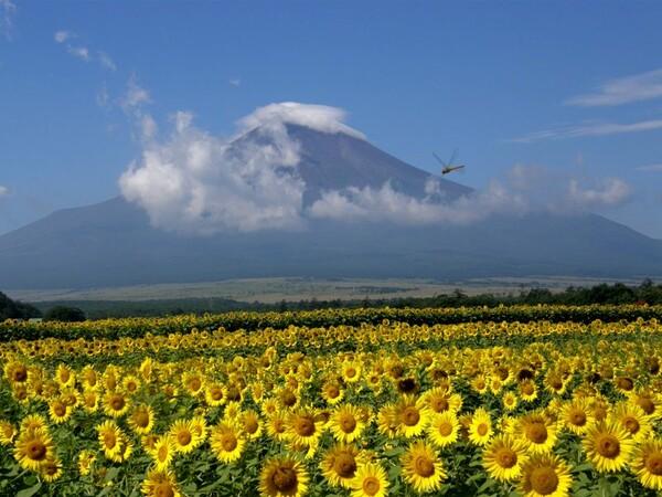 富士とヒマワリ