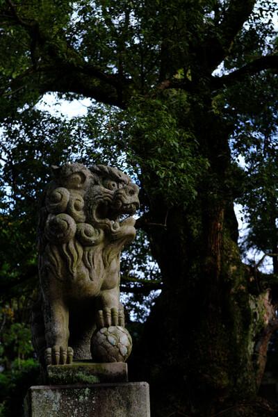 巨樹と獅子