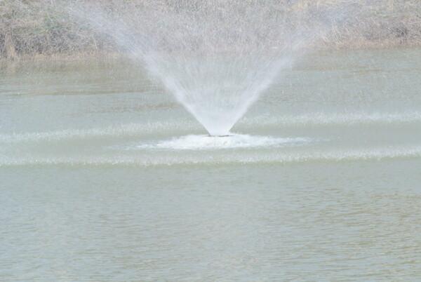 (淡彩)春の噴水