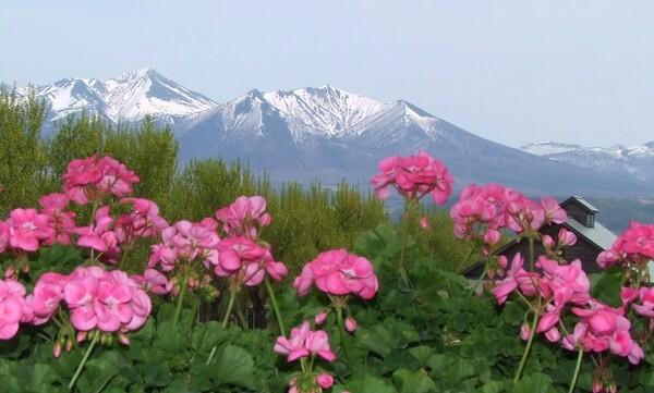 【花のある情景】残雪と共に【春】