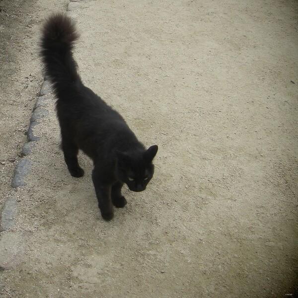 【猫】緊張野良