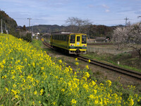 菜の花鉄道