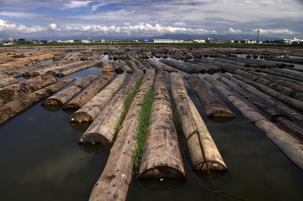 材木置場の夏