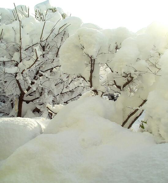 松の内脅威の雪